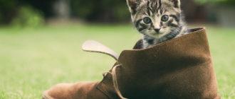 Очищение испорченных кошкой предметов