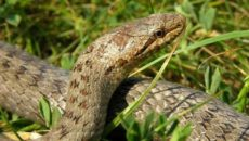 как избавиться от змей на дачном участке