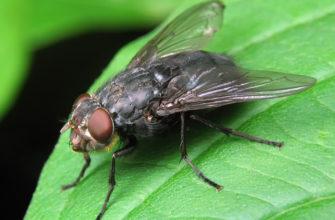 Как избавиться от мух в доме