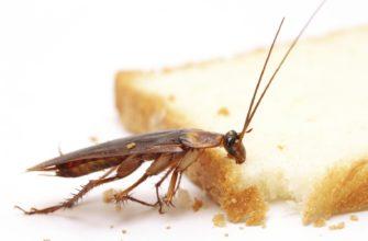 Как избавится от таракан в квартире