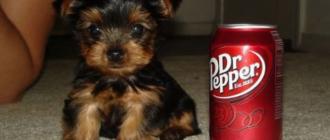 Список самых маленьких собак в мире