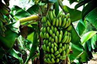 Cколько калорий в банане