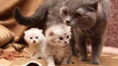 Какие факторы влияют на продолжительность жизни кошки