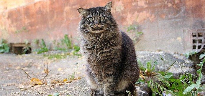 Средняя продолжительность жизни «уличной» кошки