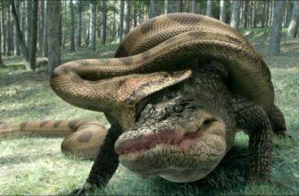 ТОП 10 самых больших змей