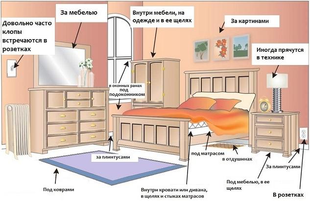 Где живут клопы в квартире